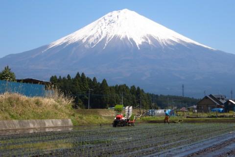 富士山に見守られながらの田植え
