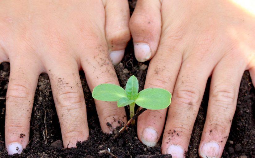 どうぞ、地球が喜ぶ生き方をしてください ~私たちが菜食をする意味~